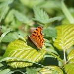 Artenvielfalt 5
